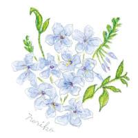 ブルーのルリマツリ